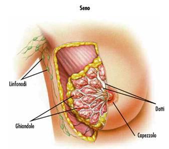 Anatomia mammaria